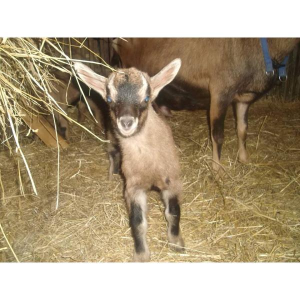 Savon au Lait de Chèvre Lavande Fabrication artisanale-La Ferme du Moulin Neuf